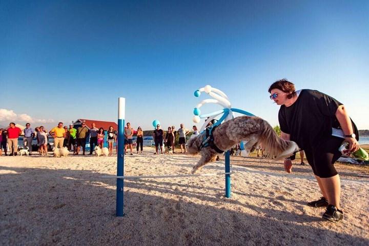 Plaže za pse 2